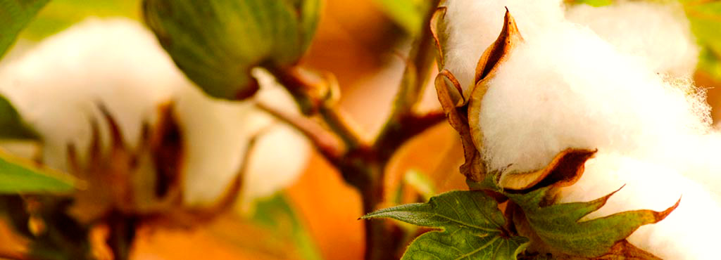 Cotton_Benefits_Feminine_Hygiene_fiber_fibres_features_positive_women_Cohitech_exporting_importing_supplying_wholesaling_manufacturing_spain