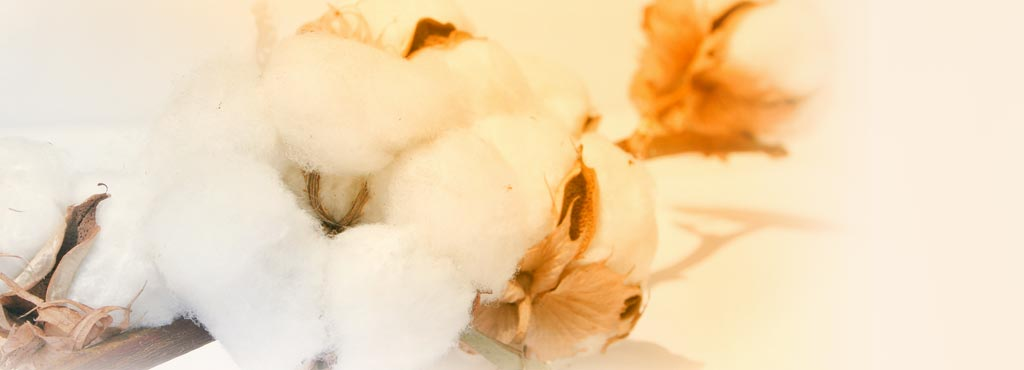 BENEFICIOS_ALGODON_natural_organico_ecologico_higiene_femenina_mujeres_salud_piel_Cohitech